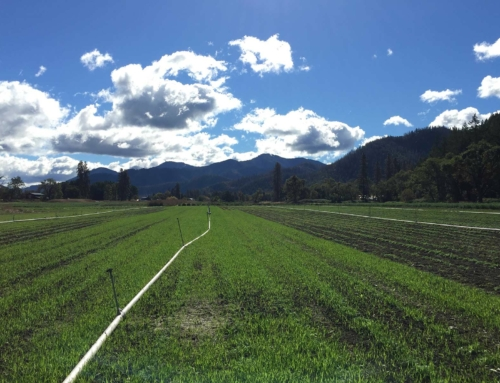 Giving Back to the Earth with Cover Crops